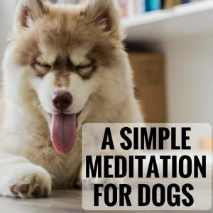 a-simple-meditation-for-dogs-post